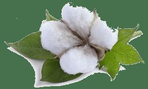 imagen de planta de algodón