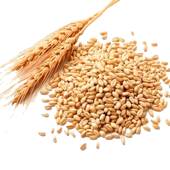 imagen de fibra de trigo